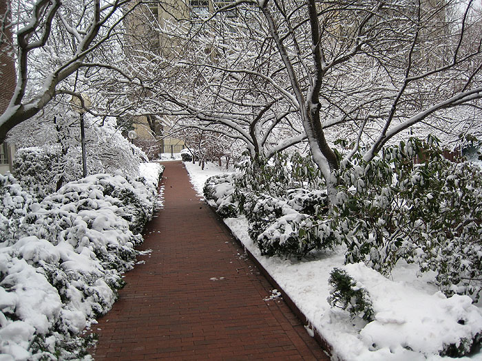 Winter Path, Charles River Park